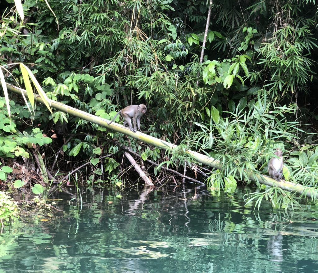 Khao Sok National Park Monkeys