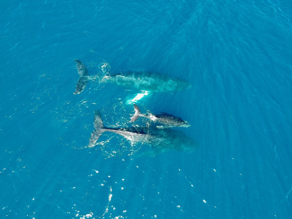 Whale watching in Maui did not disappoint. What to do in Maui.