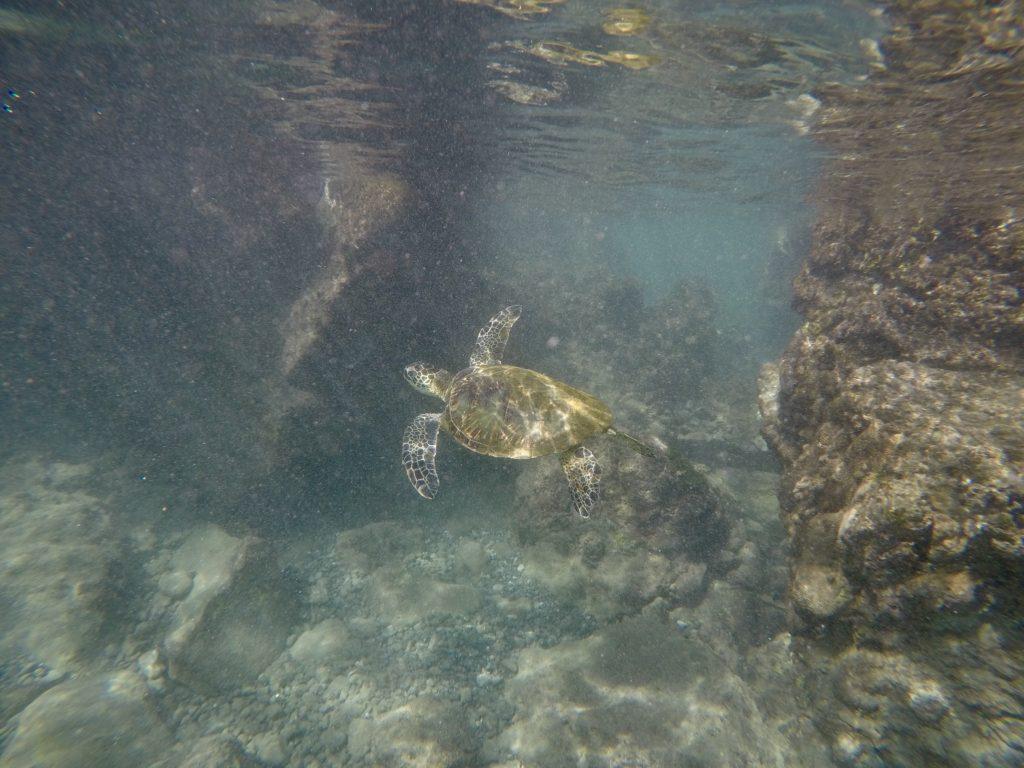 Makena Landing. What to do on Maui.