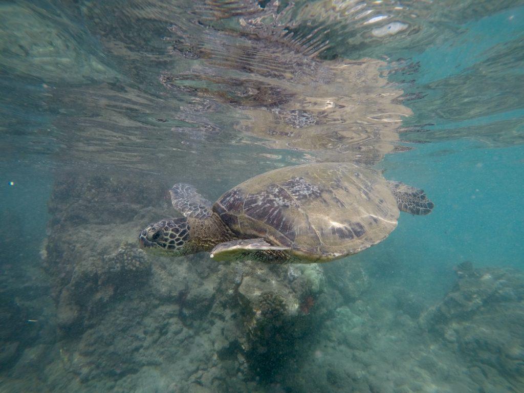 Makena Landing Snorkeling. What to do on Maui.