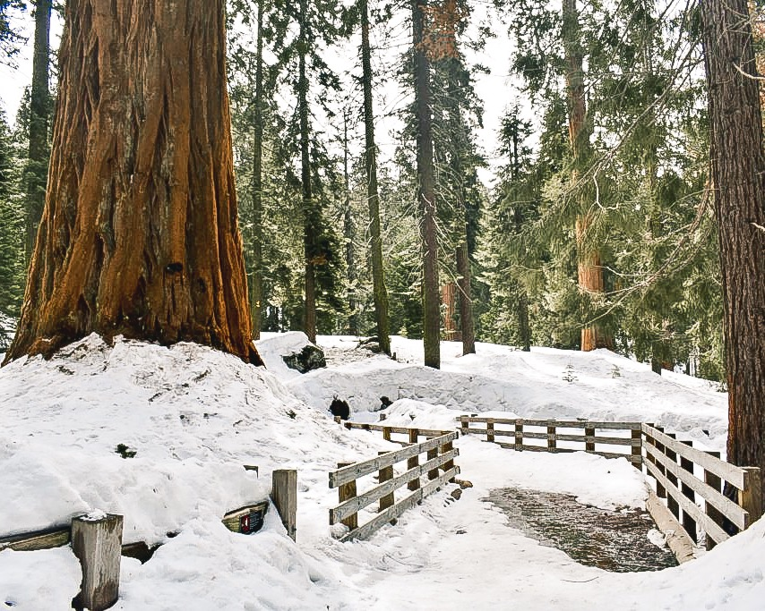 Trail to General Sherman - A Winter Visit in Sequoia / Kings Canyon National Park. What to do at Sequoia Kings Canyon National Park in the Winter.