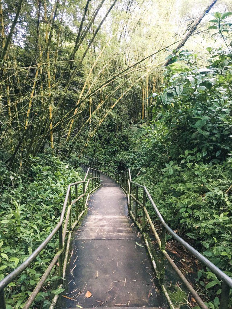 Path to 'Akaka Falls Big Island of Hawaii