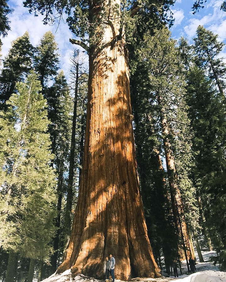 General Sherman - A Winter Visit in Sequoia / Kings Canyon National Park. What to do at Sequoia Kings Canyon National Park in the Winter.