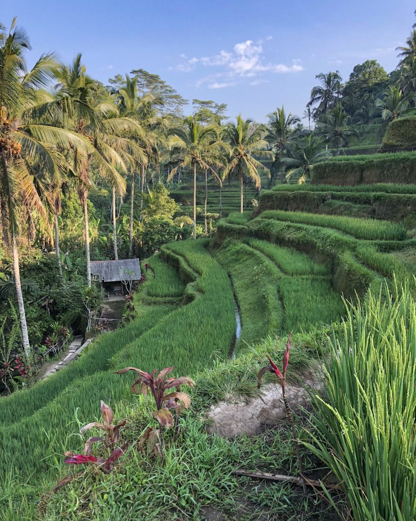 Top 12 Things to Do in Bali (Indonesia). Become a Foodie in Seminyak. Visit Nusa Penida. Where to surf in Bali. Best restaurants in Bali. What to do in Bali. Where to go in Bali. What to see in Bali. Rice Terraces. Ubud