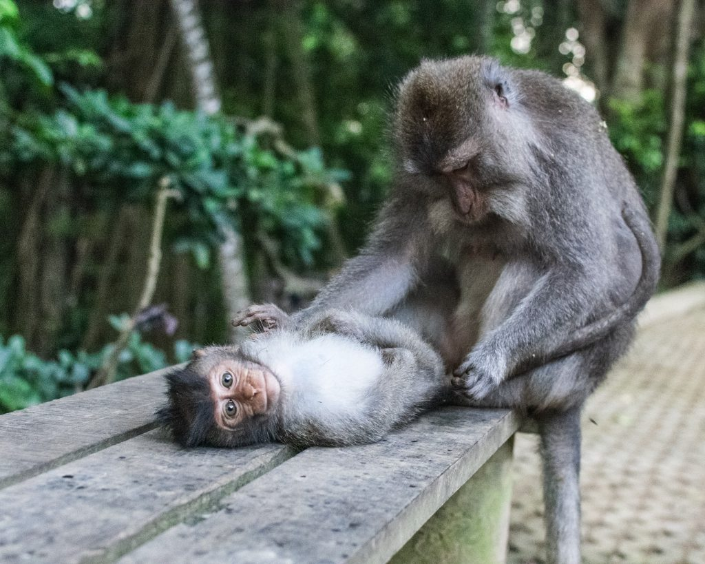 Top 12 Things to Do in Bali (Indonesia). Become a Foodie in Seminyak. Visit Nusa Penida. Where to surf in Bali. Best restaurants in Bali. What to do in Bali. Where to go in Bali. What to see in Bali. Ubud Monkey Forest